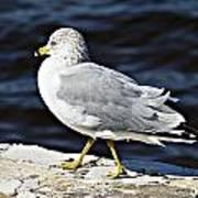 Gull 2 Poster