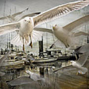 Gulls In The Harbor Poster
