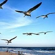 Gulls Poster by John Loreaux