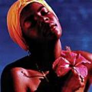 Haitien Hibiscus Beauty Poster