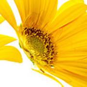 Half Yellow Gerbera Poster