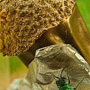 Halicid Wasp 5 Poster