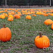 Halloween Pumpkin Patch 7d8383 Poster by Wingsdomain Art and Photography