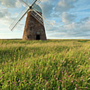 Halnaker Windmill On A July Afternoon Poster