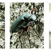 Happy Beetle Poster