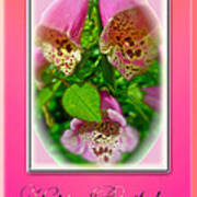 Happy Birthday Card - Foxgloves Poster