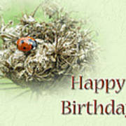 Happy Birthday Greeting Card - Ladybug On Dried Queen Anne's Lace Poster