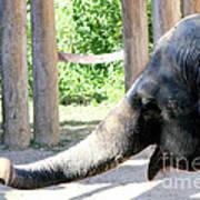 Happy Elephant Poster
