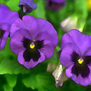 Happy Faces Purple Pansies Poster