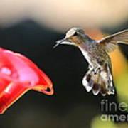 Happy Hummingbird Poster