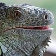 Happy Lizard Poster
