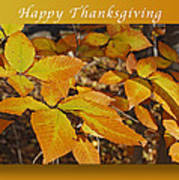 Happy Thanksgiving Beech Leaves Poster