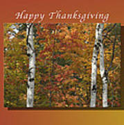 Happy Thanksgiving Birch And Maple Trees Poster