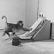 Harlow Monkey Experiment Poster by Science Source