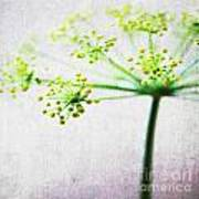 Harvest Starburst 2 Poster by Linda Woods