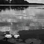 Haukkajarvi Water Lilies In Bw Poster