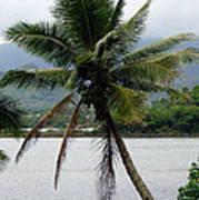 Hawaiian Palm Poster