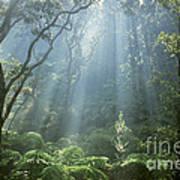 Hawaiian Rainforest Poster by Gregory Dimijian MD
