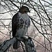 Hawk 6 Poster