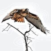 Hawk Taking Flight Poster