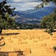 Hay Field With Mountain Background Poster