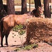 Hay's For Horses Poster