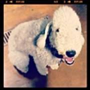 He Looks Like A Sheep! Lol 🐶 Poster by Nena Alvarez