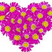 Heart From  Pink Daisies Poster