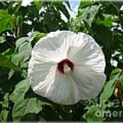 Hearty Hibiscus Poster