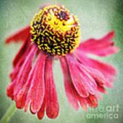 Helenium Flower 2 Poster