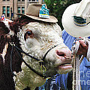 Hereford Bull With Akubra Hat In Hyde Park Poster by Kaye Menner