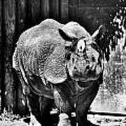 Heres Lookin At You  Kid Indian Rhino  Poster