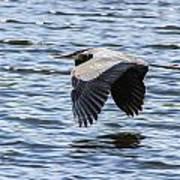 Heron Over Water Poster