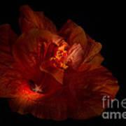 Hibiscus Glow Poster