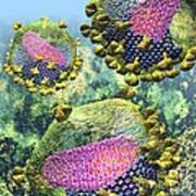 Hiv Three Sectioned Virions On Blue Poster