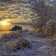 Hoar Frost Covered Trees At Sunrise Poster
