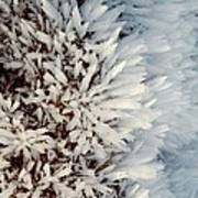 Hoar Frost Crystals On A Rock Poster