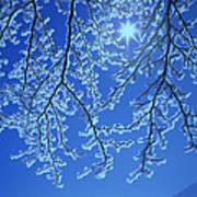 Hoar Frost Poster