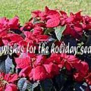 Holiday Greetings With Poinsettias Poster