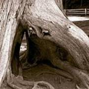Hollow Tree Poster
