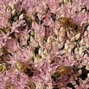 Honey Bees At Work Poster