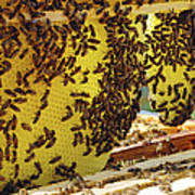 Honey Bees On A Beehive And Honeycombs Poster