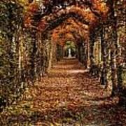 Hornbeam Alles, Birr Castle, Co Offaly Poster