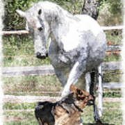 Horse And Dog Play Poster