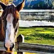 Horse At Lake Leroy Poster