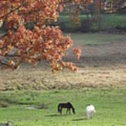 Horse Barn Hill Pasture Poster