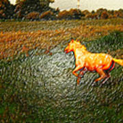 Horse Frolicking Poster