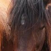 Horse Hair 2 Poster