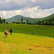 Horse Heaven Poster