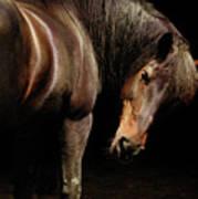 Horse Looking Over Shoulder Poster
